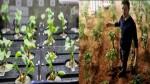 NASA விண்வெளியில் வளர்த்த முள்ளங்கிகள் அறுவடைக்கு ரெடி.. அடுத்து செவ்வாயில் தான் அறுவடையா?