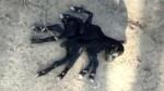 2 இடுப்பு.. 8 கால்களுடன் பிறந்த வினோதமான ஆட்டுக்குட்டி.. இறுதியில் என்ன ஆச்சு தெரியுமா?