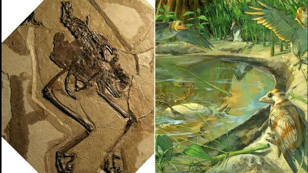 110 மில்லியன் ஆண்டுகளுக்கு முன்னர் உயிர் வாழ்ந்த பறவை கண்டுபிடிக்கப்பட்டுள்ளது.!