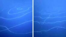 பெருங்கடலில் மிதக்கும் உலகின் மிகப்பெரிய ராட்சஸ உயிரனம் கண்டுபிடிப்பு!