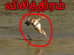 சொதப்பினாலும் உங்களை 'சிரிக்க' வைக்கும் புகைப்படங்கள்!!
