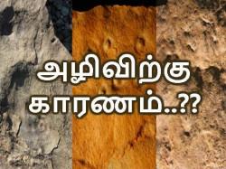முதல் வெகுஜன இன அழிவிற்கு காரணம் என்னவென்று தெரியுமா..?