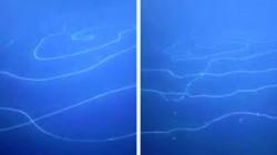 பெருங்கடலில் மிதக்கும் உலகின் மிகப்பெரிய ராட்சஸ உயிரனம் கண்டுபிடிப்பு! வியப்பில் ஆழ்த்திய உருவம்!