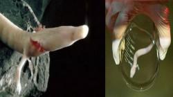நம்பமுடியாத அரிய வகை 'பேபி டிராகன்கள்'.! இரகசிய குகையிலிருந்து இனி மக்களின் பார்வைக்காக.!